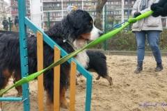 Psi-Park-w-Augustowie-11