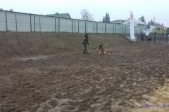 Psi-Park-w-Augustowie-18